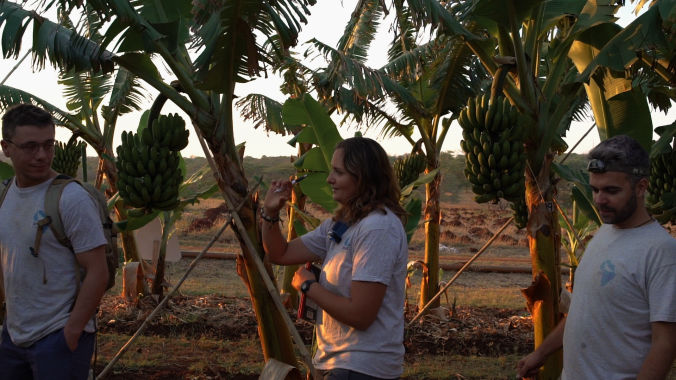 african bat conservation in banana field